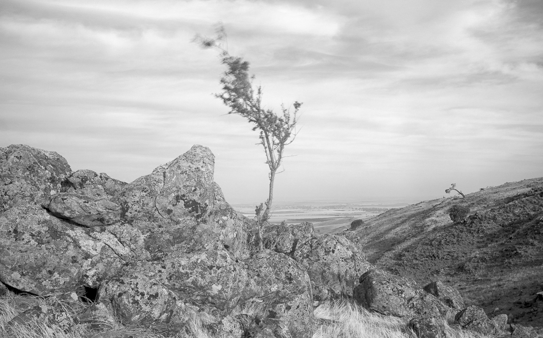 tree + rocks, Mt Lofty Ranges
