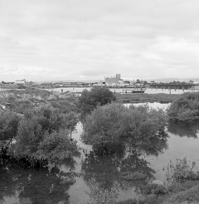 mangroves, Port Adelaide